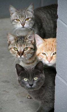 """""""Et les gars, vous avez vu la chatte là... Elle déchire non ?"""""""