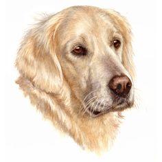 watercolour-dog-portrait-A6-1.jpg 1,500×1,500 pixels