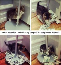 """Here's my kitten Dusty working the pole to help pay her vet bills"""
