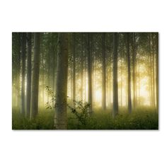 Enchanted World by Mathieu Rivrin Photographic Print on Wrapped Canvas
