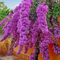 Beautiful color tree