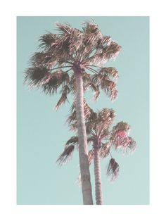 Sun Bleached Palm Trees Wall Art Prints by Baumbirdy | Minted