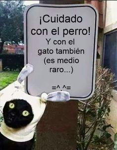 Cuidado con el perro (y más con el gato) #humor