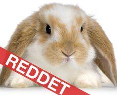 Slut med dyreforsøg for kosmetik i EU