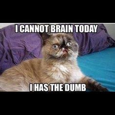 I has the dumb