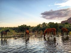 Kayaking with wild horses on the Salt River.- 12 Incredible Adventures in Arizona