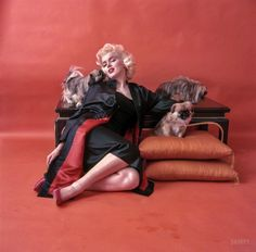 """Red Marilyn: March 1955. """"Women posed in fashions influenced by the Orient. Unpublished photograph shows Marilyn Monroe, wearing a black Chinese coat, posed with Pekingese dogs."""" Color transparency by Milton Greene for the Look magazine assignment """"Translations From the Orient."""" 