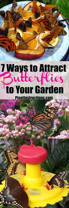7 Ways to Attract Butterflies to Your Yard - Plant Instructions Butterfly Food, Butterfly Garden Plants, Butterfly Feeder, Monarch Butterfly, Butterfly Wings, Hummingbird Garden, Hummingbird Flowers, Lawn And Garden, Garden Art