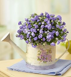 Des fleurs violettes