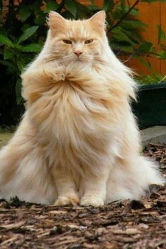 Thats one fluffy kitty!