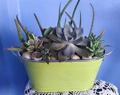 Succulent arrangement by Maria Liverpool