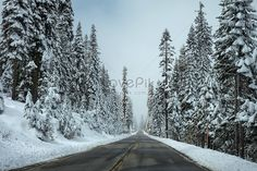 road Road, forest, winter, street, snow, bitumen, long distance, tree, frost, freezing, cold, season