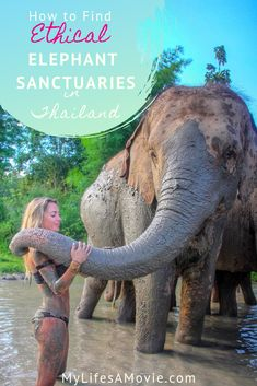 If you're wondering how to find the best ethical elephant sanctuaries in Thailand, this post will he Thailand Travel Tips, Asia Travel, Solo Travel, Backpacking Thailand, Thailand Vacation, Backpacking Trips, Elephant Nature Park, Elephant Ride, Thailand Elephants