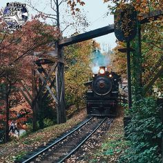 forest rail