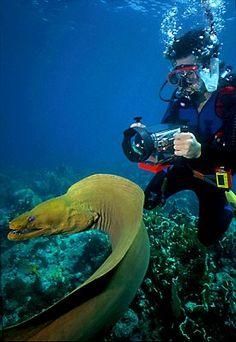 A stunning underwater shot of a Moray eel while SCUBA diving in the Florida Keys//Les Keys sont un archipel situé à l'extrémité méridionale des États-Unis, dans le détroit de Floride qui relie l'océan Atlantique au golfe du Mexique en séparant la péninsule de Floride et l'île de Cuba. Wikipédia
