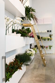 FANCY! Design Blog | NZ Design Blog | Awesome Design, from NZ + The World: BLUSH - The purdiest interior design for a modern NZ florist: