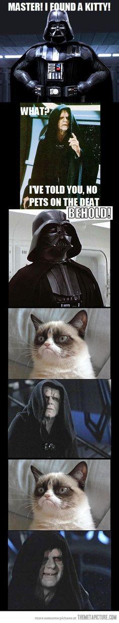 I found a kitty…