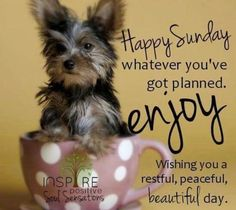 Happy Sunday ♥♥ Whatever You've Got Planned. Enjoy Wishing You A Restful, Peaceful, Beautiful Day good morning sunday sunday quotes good morning sunday sunday images sunday pictures sunday quotes and sayings Sunday Morning Quotes, Good Sunday Morning, Sunday Quotes Funny, Morning Messages, Sunday Funday, Sunday Coffee, Morning Kisses, Morning Pics, Morning Images