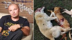 Popular Romanian rap singer claims he would have all stray dogs SHOT! | YouSignAnimals.org