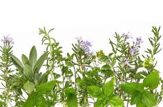 herbs as background