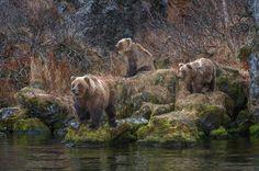Три медведяPhotographer: Сергей Иванов