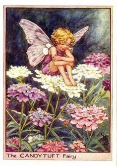 The CANDYTUFT Fairy ~ Cicely Mary Barker ~