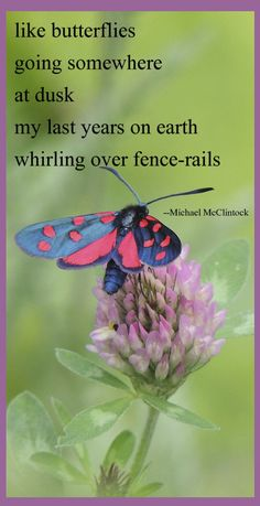 Tanka poem: like butterflies-- by Michael McClintock.  Poetry / Tanka