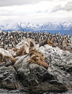 Penguins and Sea Lions in Patagonia Argentina Ushuaia, Central America, South America, In Patagonia, Argentina Patagonia, Argentina Travel, Places To See, Travel Inspiration, Travel Photography