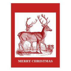 MERRY CHRISTMAS (Deer) Postcard - merry christmas postcards postal family xmas card holidays diy personalize