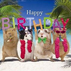 Happy Birthday Wishes, Quotes & Messages Collection 2020 ~ happy birthday images Happy Birthday Little Sister, Cool Happy Birthday Images, Happy Birthday Status, Birthday Wishes For Kids, Happy Birthday Wishes Quotes, Birthday Blessings, Pig Birthday, Birthday Love, Funny Birthday Cards