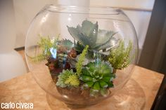 Composizione di piante grasse in vaso di vetro.carlocivera.org #piantegrasse #vetro #design #arredamento #