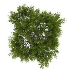 Tree Plan View Photoshop Texture Png Tree Top View Car Tuning