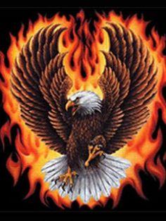 Eagle Images, Eagle Pictures, Logo Pictures, Eagle Wallpaper, Lion Wallpaper, Harley Davidson Wallpaper, Harley Davidson Logo, Eagle Painting, Patriotic Pictures