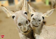 Hart voor Dieren - Aren't we cute? :)