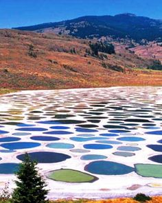 Located near the city of Osoyoos in British Columbia, Canada's Spotted Lake draws visitors from around the world. The Spotted Lake has a very highly concentration of numerous different minerals such as magnesium sulfate, calcium and sodium sulphates. It also contains extremely high concentrations of eight other minerals as well as some small doses of four others such as silver and titanium.