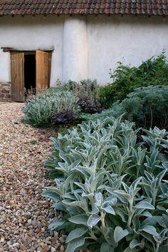 Stachys- Andrew Duff Garden Design