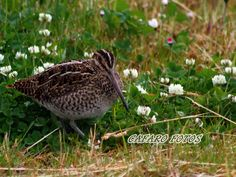 Ave de Ushuaia Ushuaia, Bird, Animales, Birds, Birdwatching
