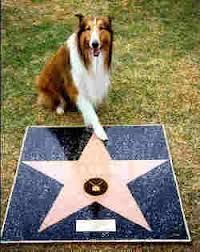 The actor who plays Lassie with his star :)