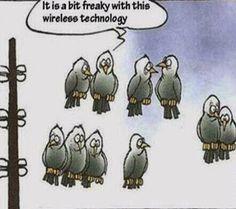 Los problemas de la tecnología Wireless en la naturaleza...