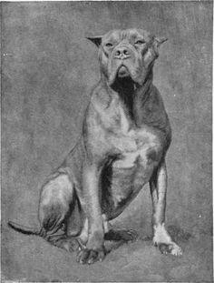 Mr. H. C. Brooke's Dogue de Bordeaux Sans Peur.