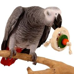 Loofah Disc Parrot Foot Toy is lightweight, so easy for your bird to carry in their feet or beak. It has sisal rope your bird can use for preening with, wood pieces to chew on and spaces to hide treats inside. Order now. For Large and African Grey Parrot, Parrot Toys, Sisal Rope, Conure, Wooden Beads, Pet Birds, Pet Supplies, Parrots, Wood Pieces
