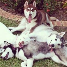 """8 of The Most Adorable """"Dog Piles"""" You've Ever Seen"""