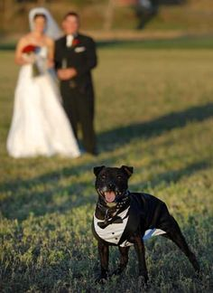 Bride, Groom and lovely dog