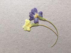 Zum Muttertag gibt's bei uns dieses Jahr keine Blumensträusse, sondern Blumenbilder mit gepressten Blumen. Vor ein paar Wochen haben wir Blumen gesammelt und unter dicken Büchern gepresst. Jetzt geht's ans Kleben.  #motherswelove #tadah #itsamomsworld #mothermag #mamablog #motherhood #motherswelove #businessmom #lifewithkids #swissmom #swissblog #slowliving #theartofslowliving #buylesschoosewell #diy #muttertag