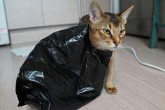 봉지와 고양이