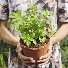 1. Peppermint http://www.prevention.com/food/10-foods-that-beat-holiday-bloat/peppermint
