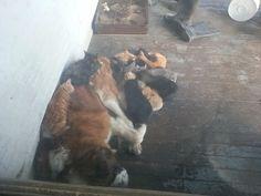 猫と犬の仲良し画像 19|ねこLatte+