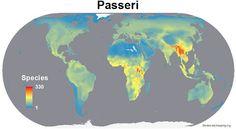 Biodiversity mapping (ORG) (49 photos)