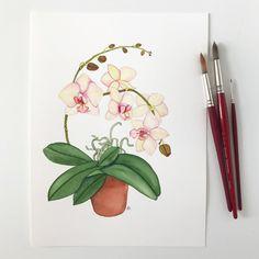 Peach Orchid Original Watercolor painting by Anne Butera Watercolor Bookmarks, Watercolor Flowers, Watercolor Paper, Watercolor Paintings, Moth Orchid, Print Calendar, Ceramic Painting, Japanese Art, Garden Art