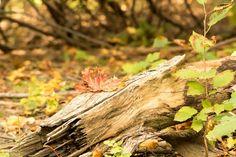 'Herbst' von toeffelshop bei artflakes.com als Poster oder Kunstdruck $17.33